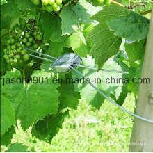 Fil fortement galvanisé pour les vignobles