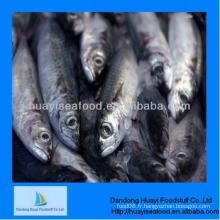 Supermarché Super qualité supérieure qualité excellente sardine fournisseur exceptionnel