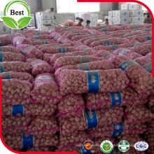 Fresh White Garlic From Jinxiang