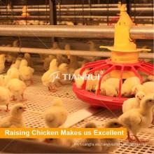 Proveedor de sistema de alimentación de cacerola de cadena de pollos de engorde