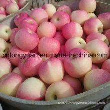 Nouvelle pomme de Gala rouge fraîche (138/150/175/198 #)