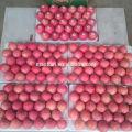 Shandong Fresh Red Fuji Apple2017 nova temporada
