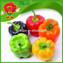 Hot vendendo verde congelado doce pimenta / fresco verde capsicum
