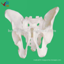 NEW! Fully Flexible Female Teaching Pelvis Model
