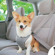 Dog Car Safety Belt
