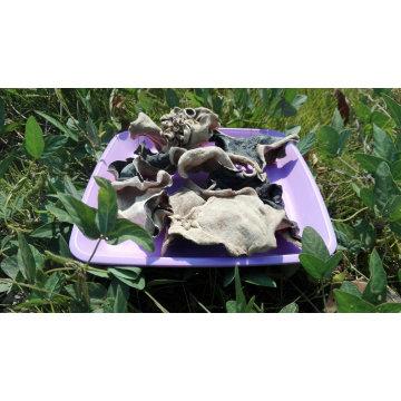 Champignon noir séché à dos blanc et achat d'une grande quantité de champignon auriculaire en bois
