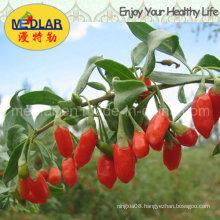 Medlar Ningxia Goji Dried Fruit