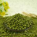 Granos de Mung verdes de la calidad primera para brotar, máquina limpiada