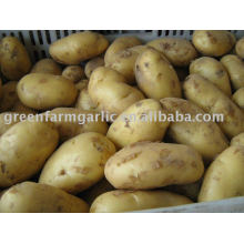 Chinese fresh potato