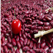 Dark Red Kidney Beans British Type, for Canned Red Kidney Beans