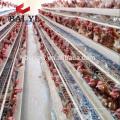 Alibaba-heiße Verkaufs-Produkt-Ei-Geflügel, das in Kerala, Indien bewirtschaftet