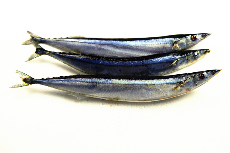 Top Grade Pacific Saury