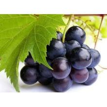 Natürliche Kräuterextrakte Europa Billberry PE