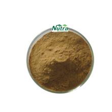 Poudre d'extrait d'herbe de menthe sauvage biologique