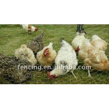 Rede de arame de frango galvanizado