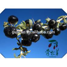 China atacado orgânica certificada secas black goji berry