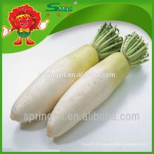 Le prix des radis blancs frais Highland du radis organique