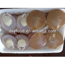 frozen bay Scallops/sea scallop