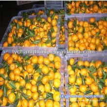 Gelb orange Früchte / Namen von roten Früchten