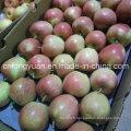 2016 Nouvelle pomme rouge fraîche avec une bonne qualité