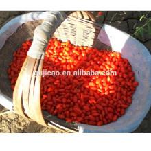 Baya Goji seca orgánica fresca de la venta caliente 2016