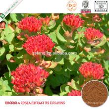 Rhodiola Rosea Rosavins 1% ~ 15% Semillas de Rhodiola Rosea