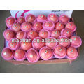 Sell Yantai Fresh Red Fuji Apple