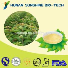 Extrato Rácio 30: 1 Rubus Suavissimus S.Lee extrato 75% Rubusoside / C32H50O13
