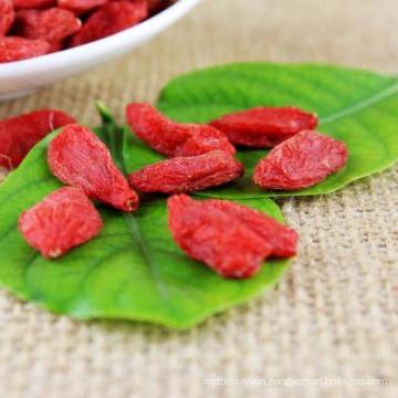 china ningxia Medicinal Organic Goji Berry