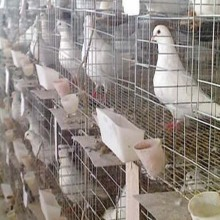 Poultry Stainless Steel Welded Mesh