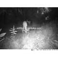 Hot wholesale waterproof night vision 12mp sms mms 3g digital hunting trail camera