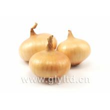 Oignon chinois frais et jaune avec sac en maille