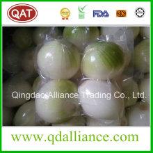 Cebolla blanca pelada fresca con paquete al vacío