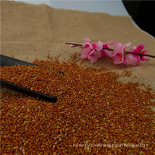 Red broomcorn millet Red millet Broomcorn millet 2016 crop