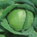 Good spherical cabbage