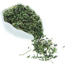 Saudável natural seco branco amoreira folhas de chá