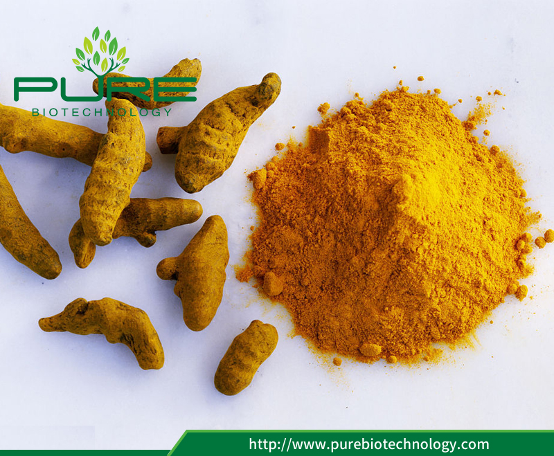 Curcuma Extract Turmeric Powder