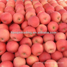 Fuji Apfel Preis in China