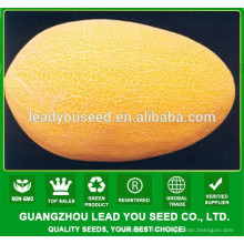 NSM05 Yaos Best oval shape sweet melon seeds supplier