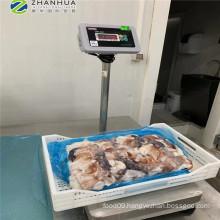 Dosidicus gigas squid neck import from Peru