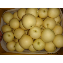 Fresh Golden Pear/Sweet Yellow Pear