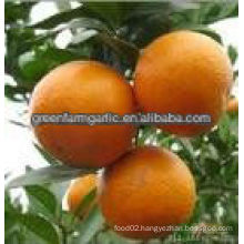 fresh orange on china with low price