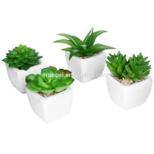 Mini fábrica en conserva en maceta de varias plantas suculentas de plástico artificial para la decoración