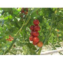 1mm PP Tomato Packing Tying Twine