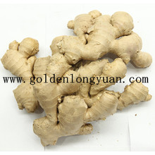 Fresh Ginger EU Market Quality