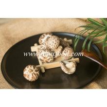 Producteur de champignons de fleurs séchées sans polluant