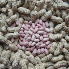 Exportar buena calidad Fresh Chinese Peanut Kernels