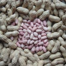 Export Good Quality Fresh Chinese Peanut Kernels