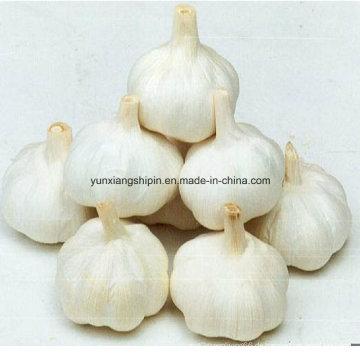 Chinesische Neuernte Purel Weißer Knoblauch
