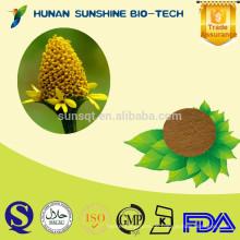 Pflanzenextrakt spilanthol / 10: 1 Acmella oleracea Extrakt Pulver